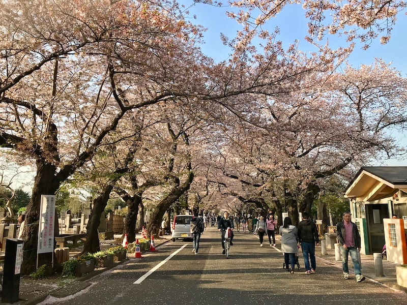 The main avenue along Yanaka Cemetery.