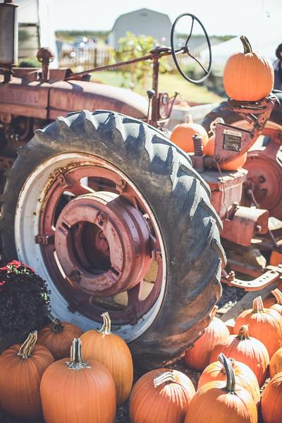 pumpkin picking 10-2016 _IMG_0877.jpg