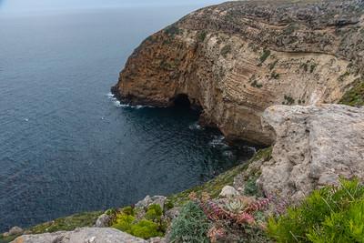 Channel Islands Santa Cruz 2019