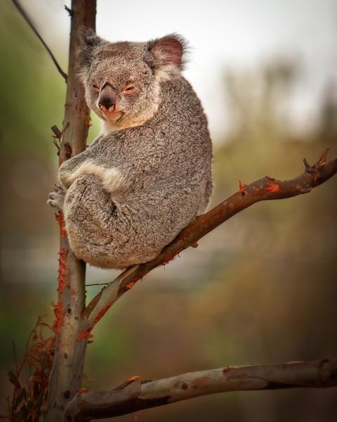 Aussie Chill