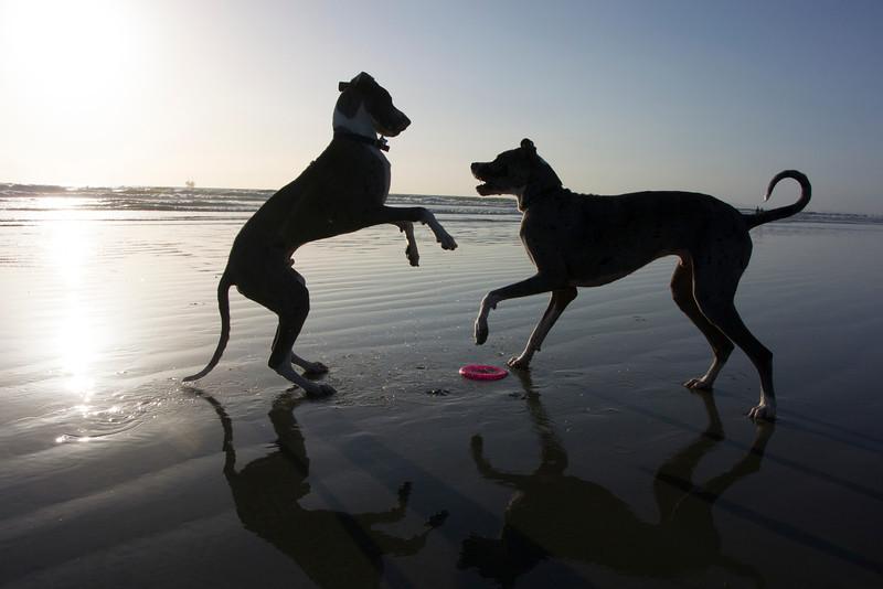 dogs_beach-47.jpg