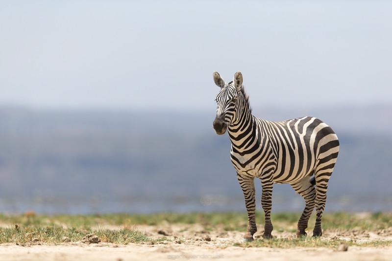 February - Nakuru
