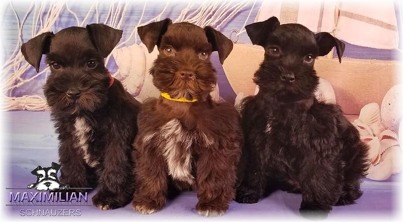 Annie Pups 014.jpg