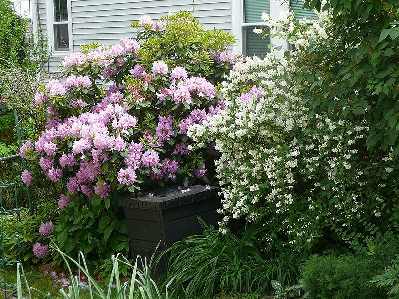 garden-2009-06-0740_std.jpg