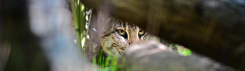 San Diego Zoo - Jan 28, 2012