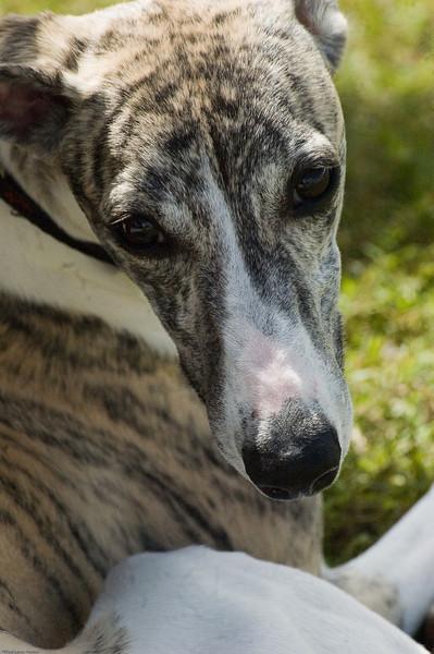 Boca Raton Dog Show-45.jpg
