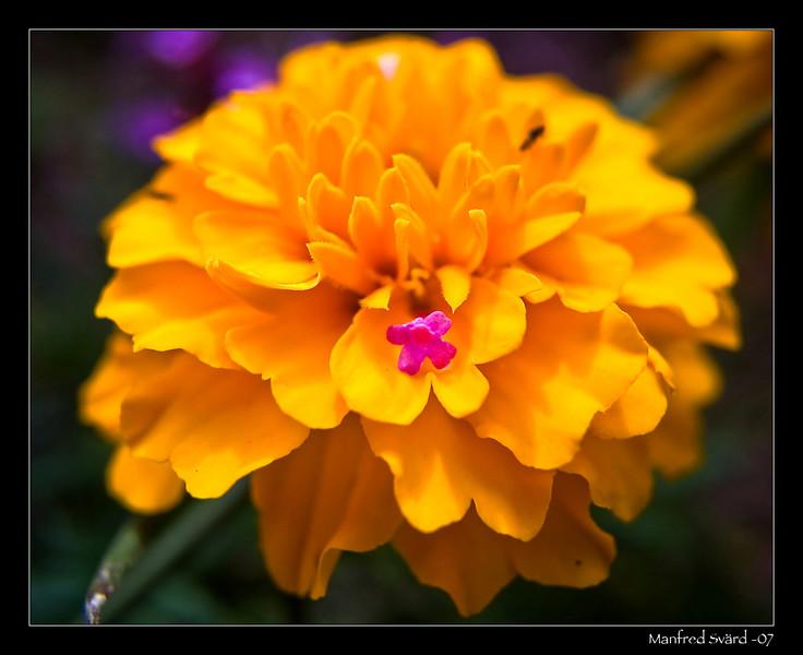 pict6780_flower.jpg