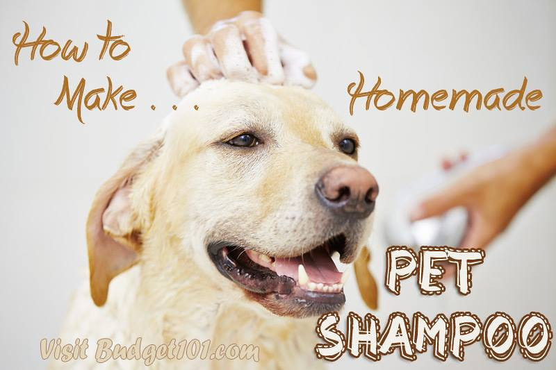 MYO Pet Shampoo http://budget101.com/pet-care-recipes/myo-pet-shampoo-4441.html  For Regular Pet Shampoo You'll Need: 1/2 c. Apple Cider Vinegar 1/4 c. Dawn Dish Detergent 1 Large Plastic Water Water bottle (16 oz)  Pour the vinegar and dawn into the water bottle, fill the bottle to neck, seal and shake lightly until bubbles form and the ingredients are mixed. To use, wet your pet thoroughly with warm water, apply the shampoo as needed, be sure to rinse well.  If you prefer to use another style container simply add about 2 cups of warm water to your recipe.  @@@@@@@@@@@@@   For Flea Destroying Shampoo, You'll Need: 1/2 C. Apple Cider Vinegar 1/4 c. LEMON JOY Dish Detergent 1 Lg Empty Plastic Water bottle  Pour the vinegar and lemon Joy into the water bottle, fill the bottle to neck, seal and shake lightly until bubbles form and the ingredients are mixed. To use, wet your pet thoroughly with warm water, apply the shampoo as needed, be sure to rinse well.  Do NOT Substitute with Other brands of detergent. Some contain harsh chemicals, Dawn has been used on animals safely for YEARS. Keep in mind that if your pet has fleas they will begin to retreat as soon as you apply shampoo. This means that they may try to crawl away into your pets ears, eyes, nose and mouth, or they may jump onto YOU to avoid the shampoo. Just keep this in mind and make sure that you pay close attention to any fleas in your pets face and remove them immediately. Follow with an additional Flea treatment within 7 days.
