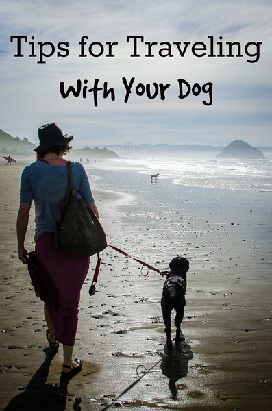 Dog friendly travel tips: Tips for traveling with your dog!
