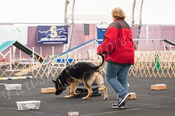 AKC  Scent Work Advanced Containers at CCSC Sat 10 13 2018