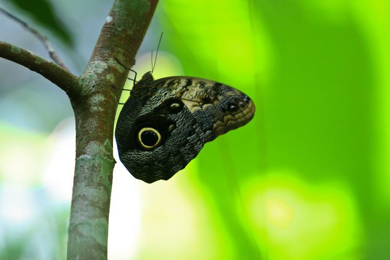 20071017-Palenque mariposa0182.jpg