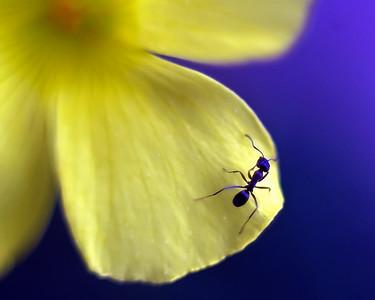 Phillip Harris - Ant Story