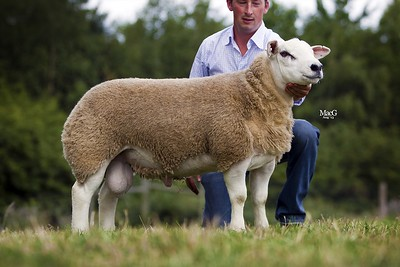 English National Show and Sale - Worcester August 26-27 2013