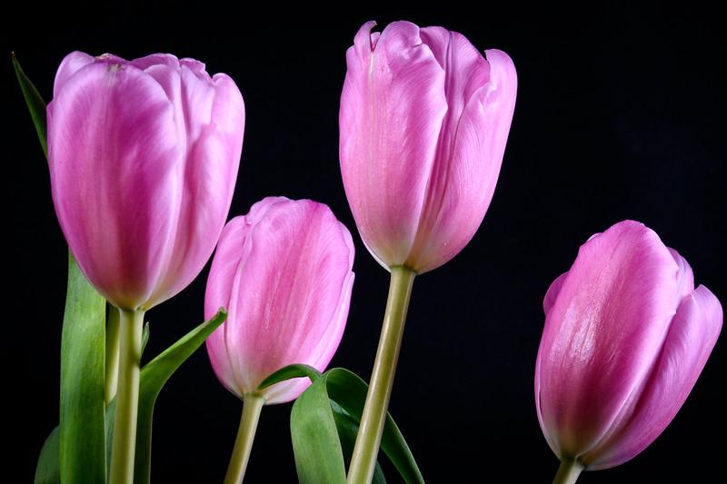 Tulips2020-015.jpg