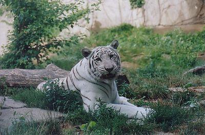 Rekha's visit 2002