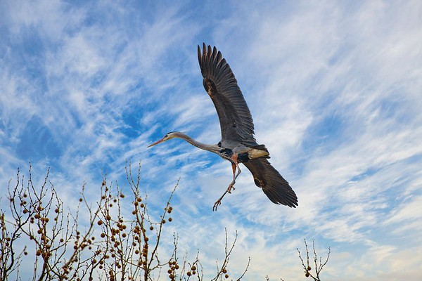 Heron Rookery 2019