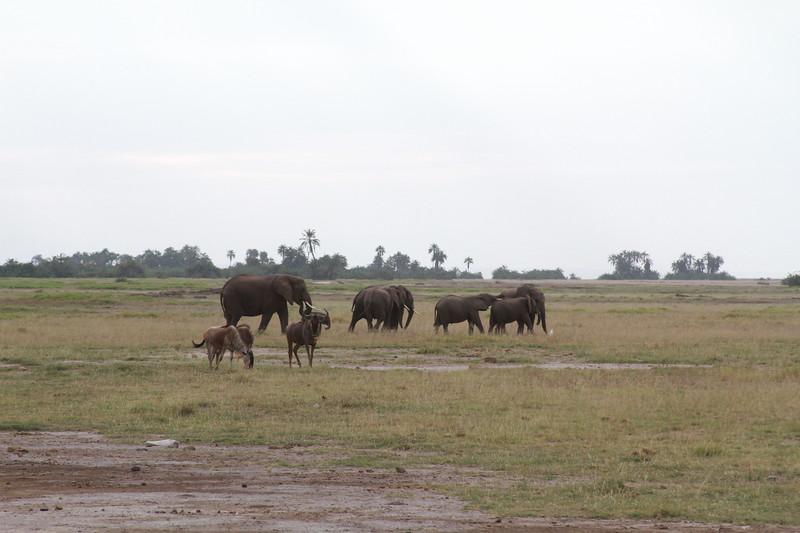 Kenya 2019 #2 305.JPG