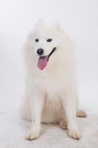 Mishka Cloud Dog