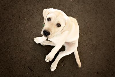Sunday in the Dog Park   |   Dog Portraits