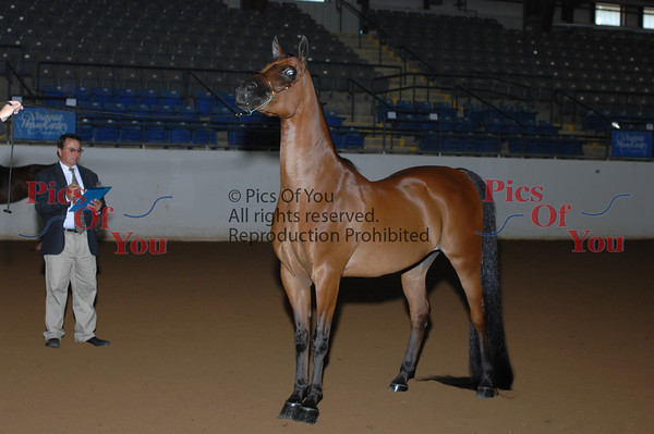032 PB Geldings AAOTH 2 and Over