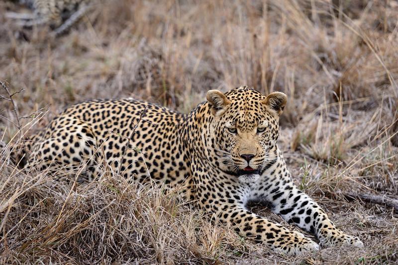LeopardHills-20130825-0131.jpg