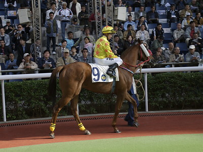 A DAY AT THE RACES  ( HONG KONG ) / 43 Photos