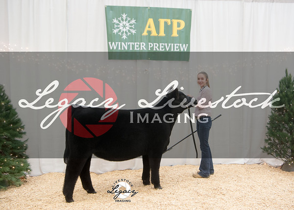 Heifer Backdrops