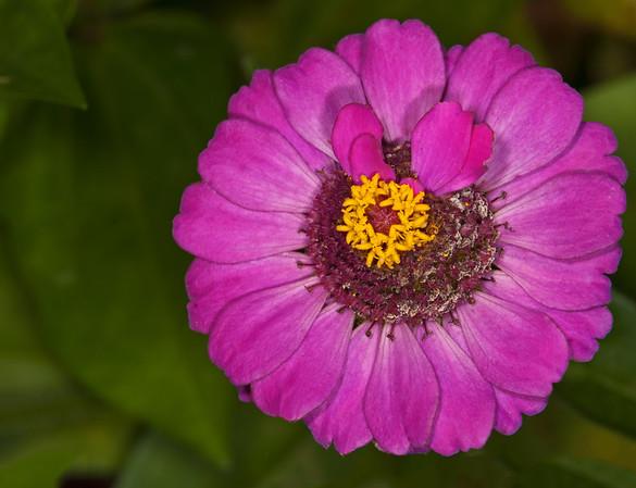 Leu Gardens - June 20, 2013
