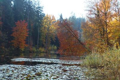 ZesOLNak-Training im Steinhauserwald