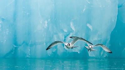 2012 Arctic Cruise