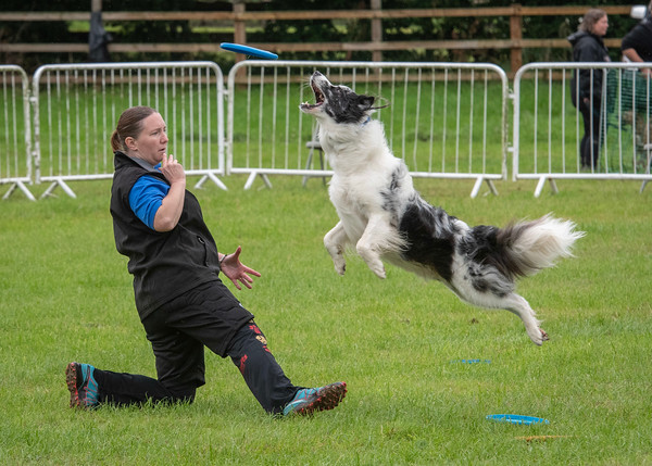 Disc Dogs - Storm and Dobbie