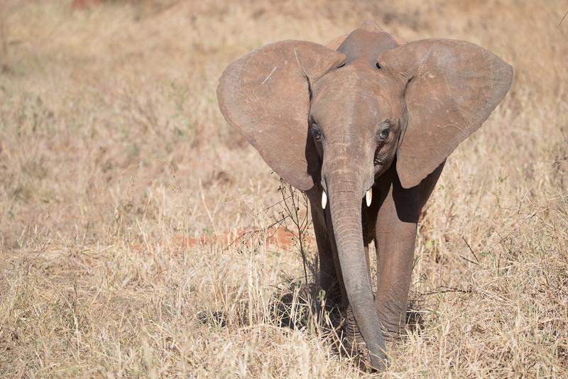 Africa - 102016 - 7588.jpg