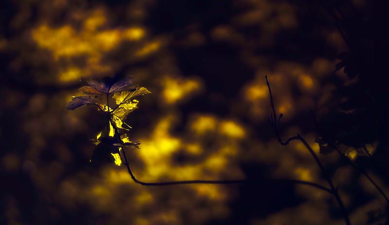 The Magic of Light-427.jpg
