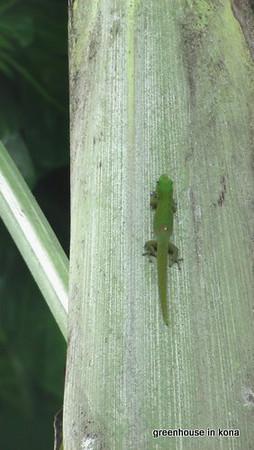 YNMy Gecko Pal.JPG