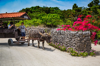 Taketomi Island, Okinawa, Japan
