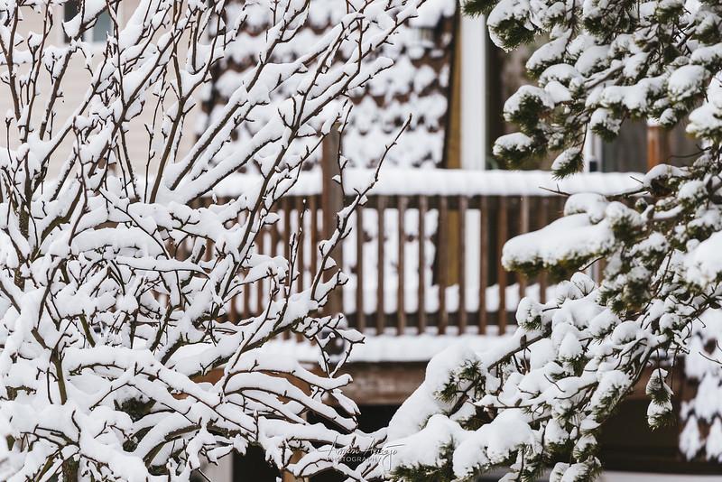 SnowWedgwoodFeb2019-5.jpg