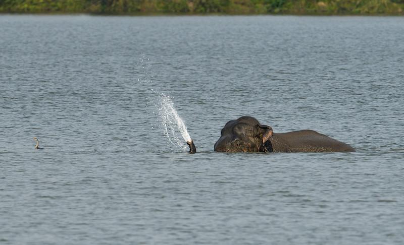 Elephant-swimming-across-lake-kaziranga-12-1.jpg