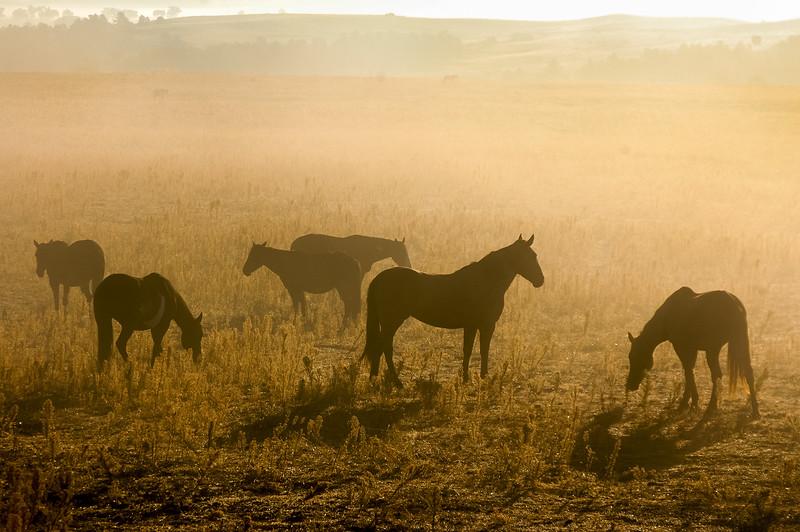 Wild Horses and Fog #1