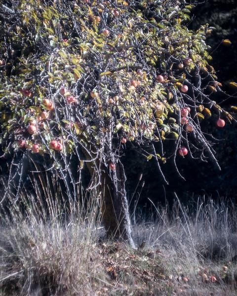 Boonville-11-2007-16.jpg