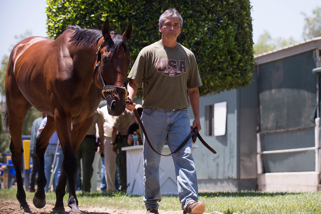 . Groom Eduardo Luna parades around Triple Crown-winner American Pharoah as he returns home to Bob Baffert\'s barn at Santa Anita Thursday, June 18, 2015. American Pharoah broke a 37-year Triple Crown drought by winning the Kentucky Derby, Preakness and Belmont Stakes. (Photo by Sarah Reingewirtz/Pasadena Star-News)