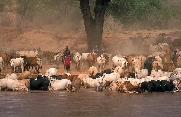 herd.jpg