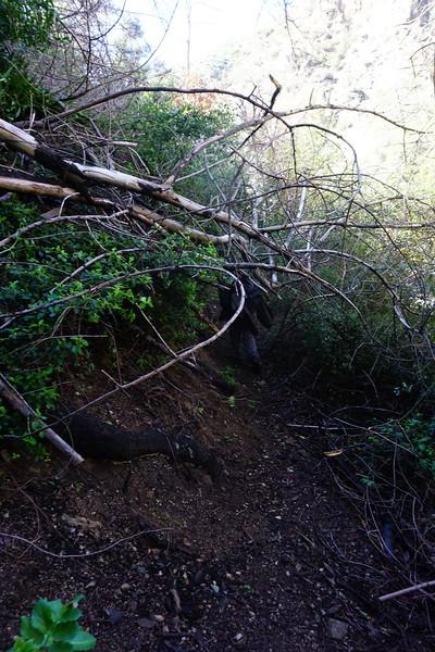 20160218107-Gabrielino Trail Scouting.JPG
