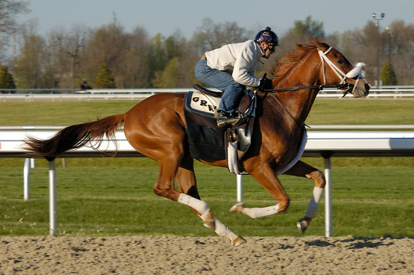 Stock image of the closeup of a thoroughbred horse and exercise jockey during an early morning workout at the Keeneland track in Lexington Kentucky USA