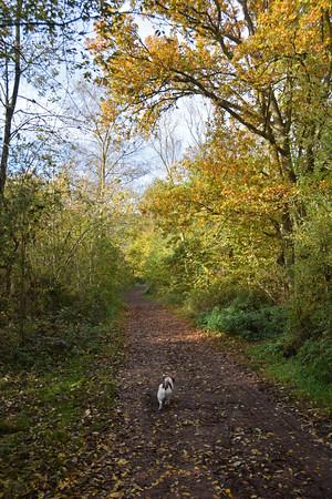 SKELLINGTHORPE OLD WOOD DOG WALK (2)