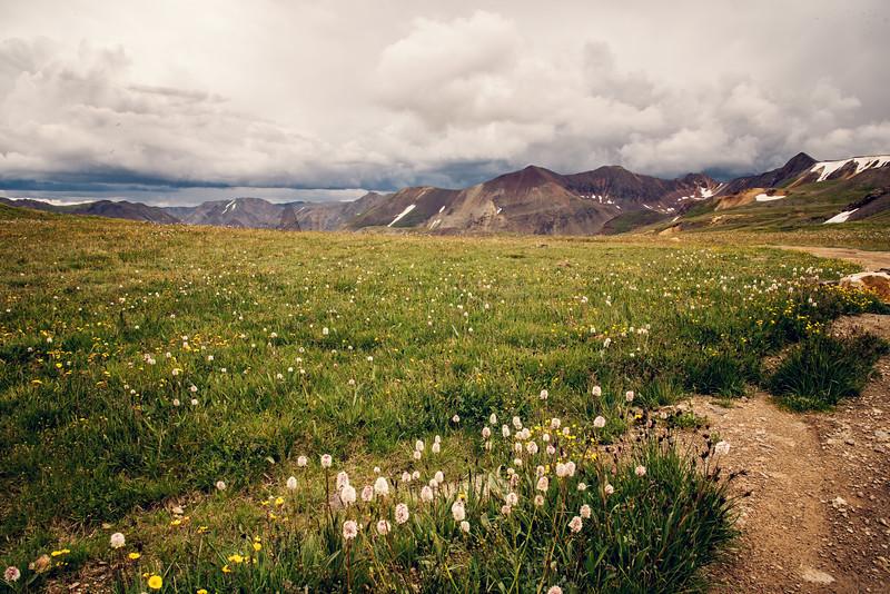 Alpine Tundra on Engineer Pass