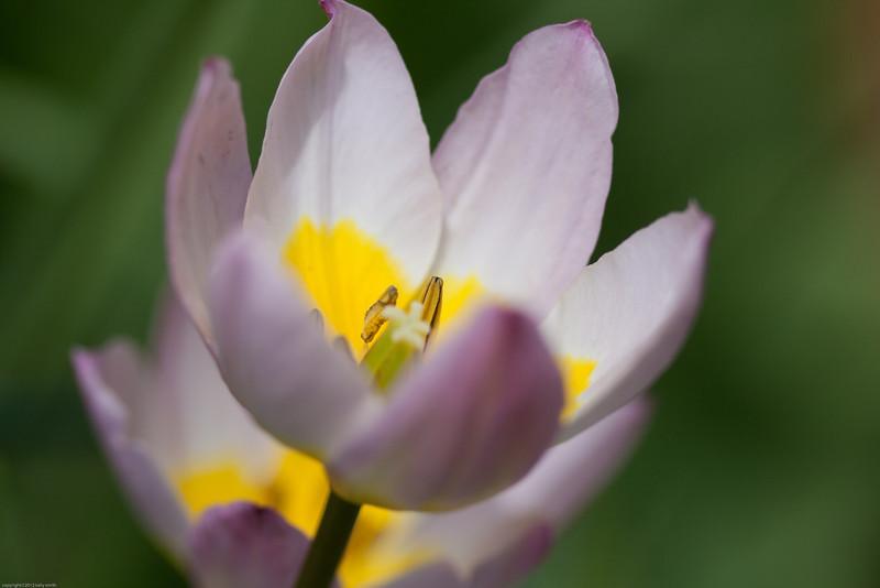 flowers-0460.jpg