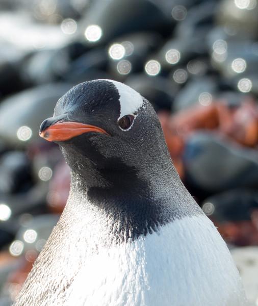 Antarctica287.jpg