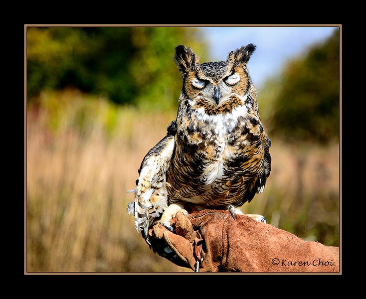 Great Horned Owl 3 sm.jpg