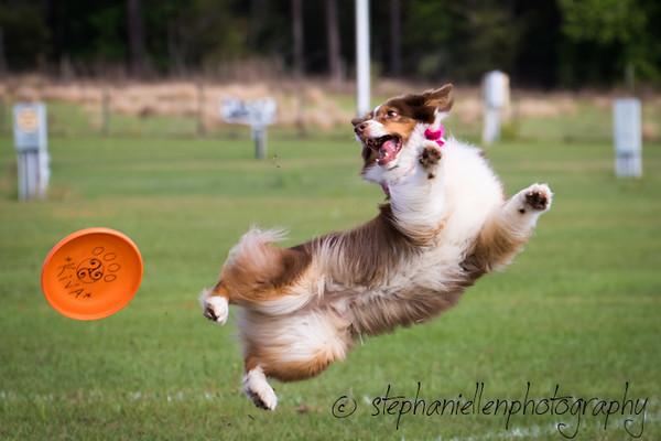 _MG_2505Up_dog_International_2016_StephaniellenPhotography.jpg