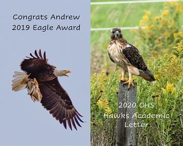 Hawks Eagle Susie